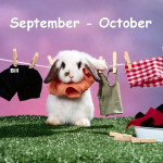 bunny clothesline