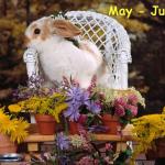 bunnyflowers