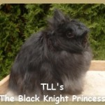 TLL's Black Knight Princess