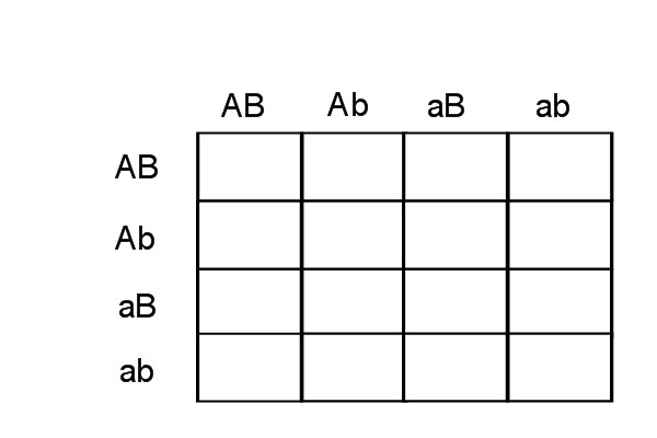 Punnett Square Worksheet Color genetics - punnett 2