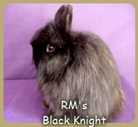 Jersey Wooly Black Knight