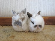 more rabbit babies